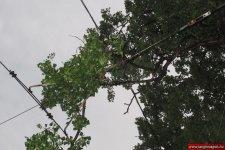 Faágak szakadtak villamospálya felsővezetékére a XI. kerületben  / www.langlovagok.hu
