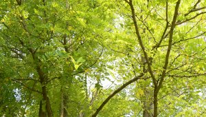 Fiatalítja az erdőt Őrmezőnél a Pilisi Parkerdő Zrt.