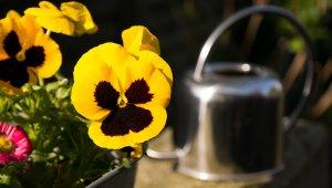 Kétnyári virágokkal díszíti a közparkokat a Főkert