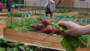 Továbbra is igény van közösségi kertekre